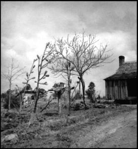 Bottle Trees, 1997, Bibb County, Alabama.